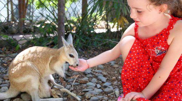 Feed the Kangaroos and Wallabies